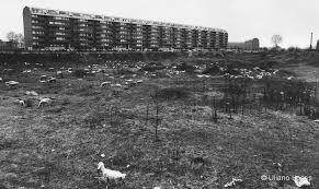 Via San Vigilio (a ridosso della Via Ovada). Quartiere Sant'Ambrogio 1, primi anni '70. (da uilanolucas.it)